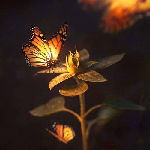 img_SolarFlow